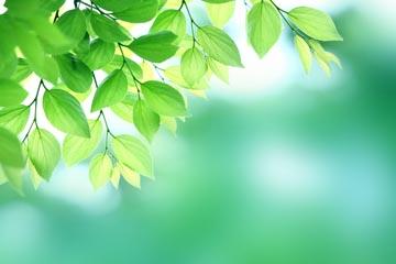 green4a