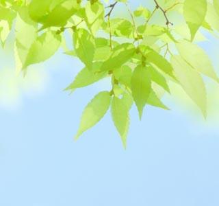 leaf2a