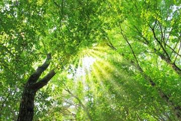 tree3a