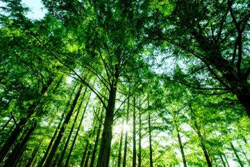 tree12a